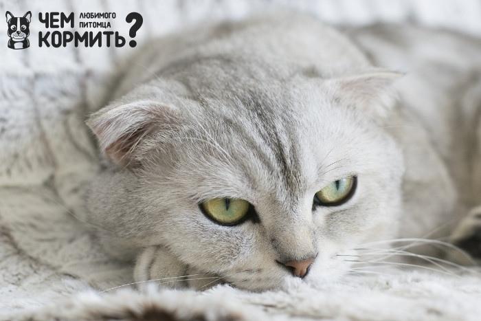 Купить Корм для котов Royal Canin в Украине — ZooHappy
