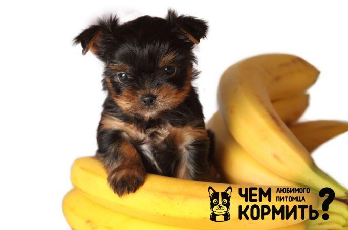 Натуральное питание щенка йорка