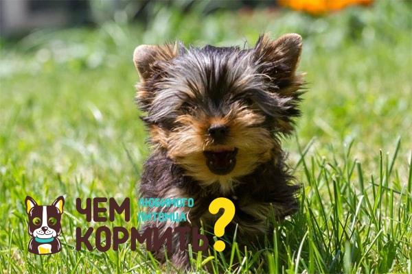 Корм First Choice (Фест Чойс): состав, отзывы владельцев собак