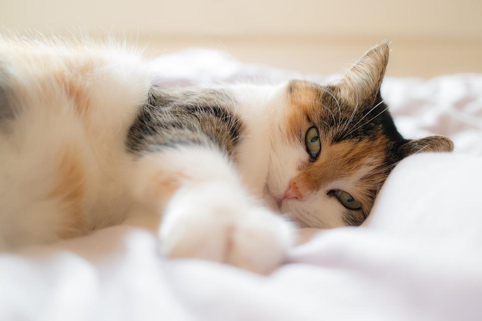здоровая домашняя кошка