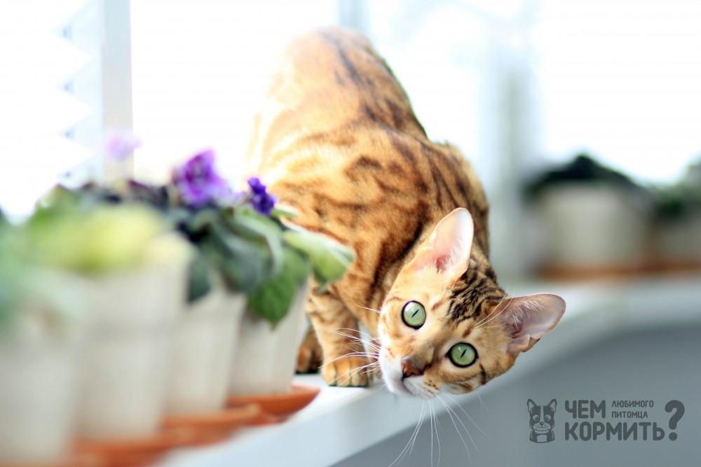Купить сухой корм для кошек Josera (Йозера), недорого