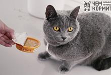 Чем кормить кошку в домашних условиях рецепты